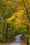 Scenic Road Through Autumn Forest Indiana  USA