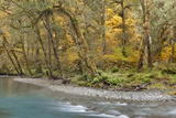 Scenic of Quinault River in the Olympic National Park  Washington  USA