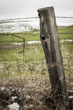 Wooden Fence Post around a Wheat Field  Palouse  Washington  USA