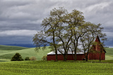 Red Barn under Stormy Skies with Green Peas  Palouse  Washington  USA