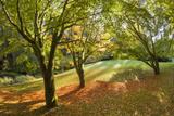 Fall Scenic on the Bloedel Reserve  Bainbridge Island  Washington  USA