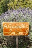 Outdoor Bar Sign  Pigna  La Balagne  Corsica  France