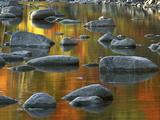 South Fork Potomac R  Monongahela National Forest  West Virginia  USA