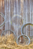 Wire Coiled on Barn Wall  Petersen Farm  Silverdale  Washington  USA