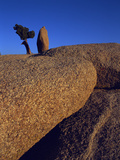 Curving Rocks of Joshua Tree National Park  California  USA