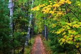 Wooden Walking Trail in Acadia National Park  Maine  USA