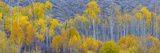 Panorama  Aspens  Winthrop  Western Washington  USA