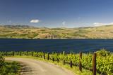 Vineyard in the Lake Chelan AVA  Washington  USA