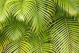 Palm Leaves  Maui  Hawaii  USA