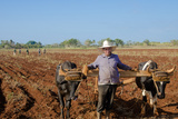 Farmer Planting Corn with Traditional Plow and Oxen  Trinidad  Cuba