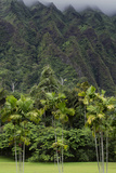 Cliffs of Koolau Mountains Above Palm Trees  Oahu  Hawaii  USA