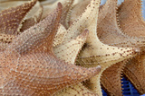 Souvenir Starfish and Seashells for Sale  Livingston  Guatemala
