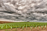 Storm Clouds Gather over Southwind  Walla Walla  Washington  USA
