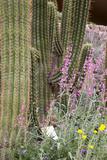 Desert Environment  Arizona-Sonora Desert Museum  Tucson  Arizona  USA