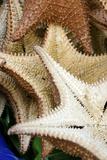 Souvenir Starfish and Seashells for Sale  Livingston  Guatemala
