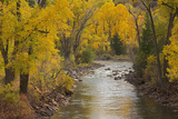 Crystal River  White River National Forest Colorado  USA