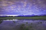 Uncompahgre National Forest at Sunrise  Colorado  USA