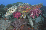 Underwater Scenic of Fish and Coral  Raja Ampat  Papua  Indonesia