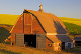 Canola and Barn  Palouse  Washington  USA