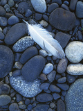 Gull Feather and Stones  Snake River  Hells Canyon Washington  USA