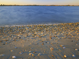 Shore at Sunset  Chesapeake Bay  Virginia  USA