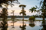 Bald Cypress at Sunset  Atchafalaya Basin  Louisiana  USA