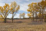 Prairie Grassland  Beatrice  Nebraska  USA