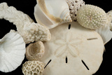 White Seashells  Sand Dollar  and Coral from around the World