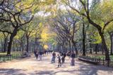 The Mall  Central Park  Manhattan  New York  USA