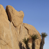 View of Heart-Shaped Rock  Joshua Tree National Park  California  USA