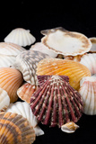 Detail of Seashells from around the World Papier Photo par Cindy Miller Hopkins
