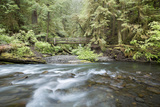 Barnes Creek Through Forest  Olympic National Park  Washington  USA