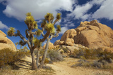 Jumbo Rocks  Joshua Tree National Park  California  USA