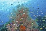 Underwater Scenic of Fish and Coral  Raja Ampat  Papua  Indonesia