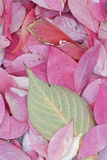 Leaves  John a Finch Arboretum  Washington  USA