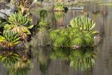 Landscape  Mount Kenya National Park  Kenya