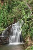 Waterfall Along the Trail to Queens Bath  Lihue  Kauai  Hawaii  USA