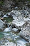 Restonica River  Gorges De La Restonica  Corte  Corsica  France