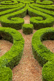 Manicured Boxwood Gardens  Hotel Carnavalet  Les Marais  Paris  France