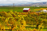 Autumn in Walla Walla Wine Country  Walla Walla  Washington  USA