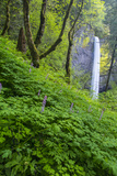 Lautorell Falls in the Columbia Gorge  Oregon  USA