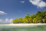 White Sand Beach in Caribbean Sea  Southwater Cay  Stann Creek  Belize
