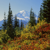 Mt Rainier Above Autumn Huckleberry  Chinook Pass  Washington  USA