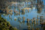 Aerial Photo of Atchafalaya Basin Area  Lake Martin  Louisiana  USA