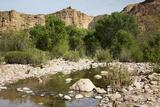 Fish Creek  Tonto National Forest Apache Trail  Arizona  USA