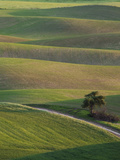 Wheat Fields  Palouse  Whitman County  Washington  USA