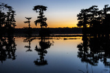 Lake Martin at Sunset with Bald Cypress Sihouette  Louisiana  USA