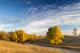 Ash Trees in Autumn Color at Arrowwood NWR  North Dakota  USA