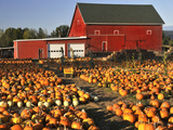 Red Barn and Pumpkin Display in Willamette Valley  Oregon  USA
