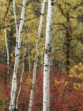 Black Hills Area Custer State Park  Autumn Foliage  South Dakota  USA